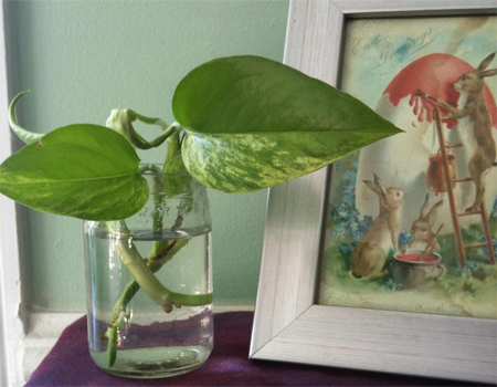 Live Plant Cutting with Recycled Glass Vase and Care Instructions by SevenAcreWoods